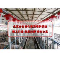 猪用料线_猪用自动供料系统_1秒喂料_自动化养猪设备方案_永高农牧