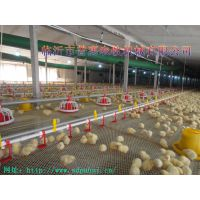 普惠机械 养鸡设备 鸡用自动化饮水器 、 质保一年 出口品质
