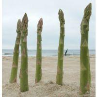 美国进口格兰德-高产芦笋种子