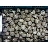 出口韩国花菇菌棒