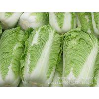 泰安蔬菜购销 山东蔬菜种植基地 直销绿色无公害蔬菜 量大从优