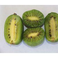 软枣猕猴桃树苗 1年软枣猕猴桃苗多少钱一棵