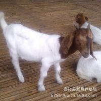 波尔山羊育肥羊价格R育肥一只羊到出栏需要多少时间和养殖成本