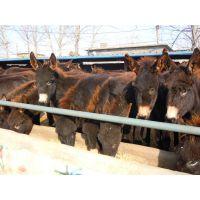 山东哪里有肉驴养殖场,肉驴多少钱一斤?