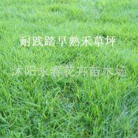 批发进口四季青草坪种子草地早熟禾 免修剪 肯塔基 优美