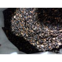 槐树种子 刺槐种子 国槐种子 紫穗槐种子批发价出售