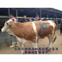 黄牛生产厂家黄牛报价、黄牛现在多少钱一头、黄牛批发价咨询、黄牛价格