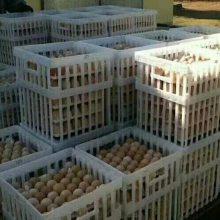 种蛋运输筐 福德中兴鸡蛋筐生产厂家 36枚鸡蛋筐
