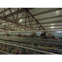 供应全场自动喷雾加湿降温消毒设备方便使用、养殖场消毒机