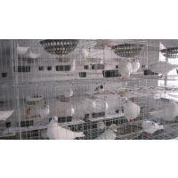 工厂现货批发零售 加粗肉鸽笼 12位16位鸽笼子15633528151