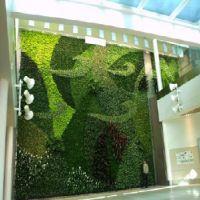 福州哪里有提供***优惠的植物墙_优质的植物墙