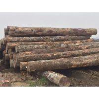 肇庆建筑木板材 优质木方 厂家直销