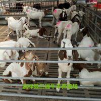 山东波尔山羊种养基地 湖北山羊养殖场 襄阳养殖波尔山羊