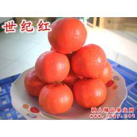 世纪红柑橘和东方红柑橘区别在哪里 世纪红挂果期长