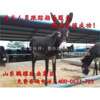 山东肉驴养殖场 肉驴价格 圈养肉驴利润