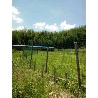 养鸡铁丝网围栏厂家供应散养土鸡山鸡绿色铁丝网