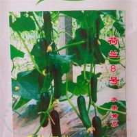 高品质进口荷兰8号水果黄瓜种子 青瓜 高产抗病毒品种  1000粒