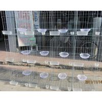 我厂批发供应鸽子笼 鸽子养殖笼 十二位鸽子笼