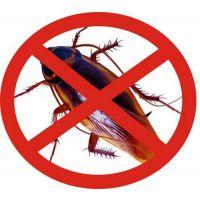 家庭灭蟑螂公司电话,丰台家庭灭蟑螂,天下无虫(在线咨询)
