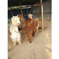滨州哪里卖小牛犊≈3≈[有的8月龄即能受胎。]
