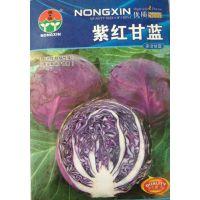蔬菜种子 紫红甘蓝种子 杂交甘蓝 抗逆性抗病性强 市场畅销 5g/包