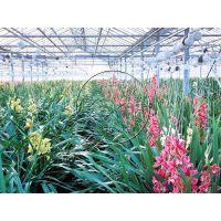 热镀锌钢构花卉展厅/种植温室大棚造价是多少钱—青州瀚洋温室工程