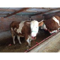 东北肉牛牛犊价格多少东北牛犊价格多少