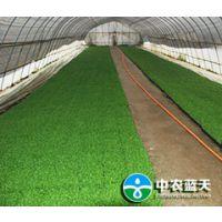 中农蓝天秸秆食用菌种植技术,开启致富新通道