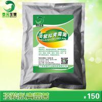 淡紫拟青霉防治根结线虫新型生物农药淡紫拟青霉线虫克星特效药