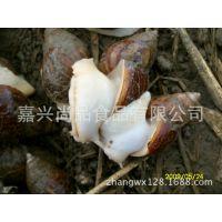 厂家直销 蜗牛种苗 白玉蜗牛种苗 临产种蜗牛