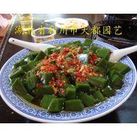 中华乡村美食树叶豆腐【神豆腐】豆腐树、豆腐树苗(H40-200cm),种植技术和报价