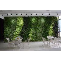 武汉植物墙加盟,潜江植物墙,植物墙防水