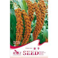 花卉种子 谷子种子 小米种子 糜子种子 黄金谷 谷子 春播30粒/包