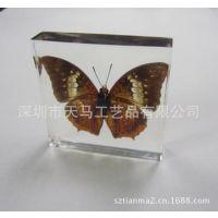 蝴蝶标本 昆虫标本 昆虫琥珀 昆虫工艺品