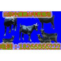 努比亚黑山羊改良品种 小羊羔养殖效益 怀孕黑山羊价格 肉羊羔