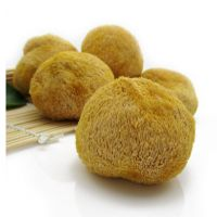 福建古田 食用菌 猴头菇   低价批发 猴头菌、猴头、猴菇、猴蘑