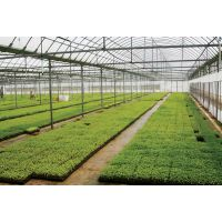 pc板温室、pc阳光板温室、温室大棚专用pc阳光板