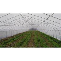 芳诚园艺(已认证)、蔬菜大棚、河源蔬菜大棚