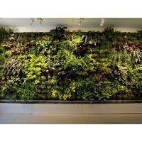 供应室内室外绿化墙植物墙承包工程