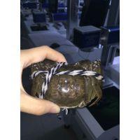 螃蟹激光打印机 个性定位设计