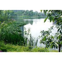 观源景观(图),生态景观设计公司,府谷生态景观设计