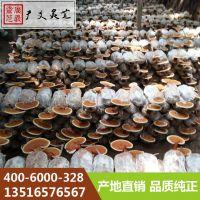 山东厂家教您怎样吃灵芝切片 广义灵芝
