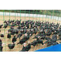 五星Fivestar 低价供应 养殖护栏网价格/深山养殖网/养鸡铁丝网