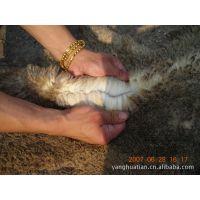 供应进口绵羊皮生皮  乌拉圭盐湿生皮 盐干生皮 生皮毛皮