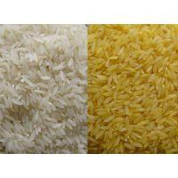 供应新型黄金米人参米生产线
