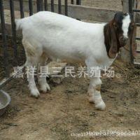 波尔山羊种羊的价格 卖波尔山羊种羊的在什么位置