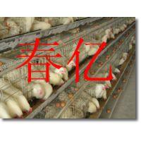 鸡笼价格、蛋鸡笼价格、阶梯式蛋鸡笼价格、蛋鸡笼多少钱一组