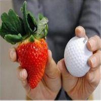 开封章姬草莓苗、红丰园艺场(图)、章姬草莓苗苗圃