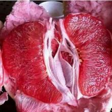 三红蜜柚苗批发市场在四川哪个地方?