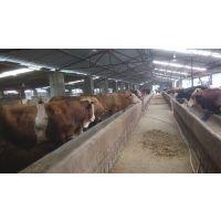 祥犇养殖场 销售一批 鲁西黄牛 肉驴 西门塔尔牛 波尔山羊 欢迎选育